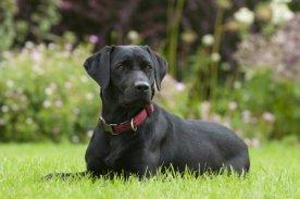 12 Easiest Dog Breeds To Train – iHeartDogs.com