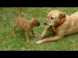 5 Top Dog Training Tips Free Dog Training From Youtube - Download
