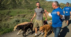 Cesar s Way | Official Site Of Dog Behaviorist Cesar Millan