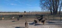 Dog Boarding and Dog / Puppy Training in Hutchinson, KS | Special