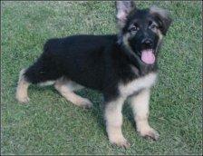 Off Leash Dog Training Nick White - Dog : Pet Photos Gallery