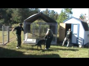 Personal Protection and Police Dog Training Tarheel Canine! - YouTube