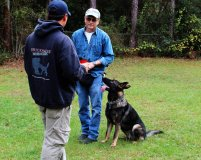 Professional Dog Trainers Tampa Florida |All Breed Pet Obedience