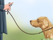 Proven Ways to Train Your Dog - wikiHow
