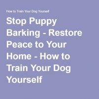 Stop Puppy Barking - Restore Peace to Your Home - How to Train