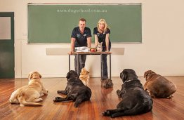 Washington DC Dog Trainers - Google+