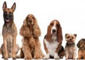 Dog training classes NJ