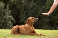 Training your dog to stay